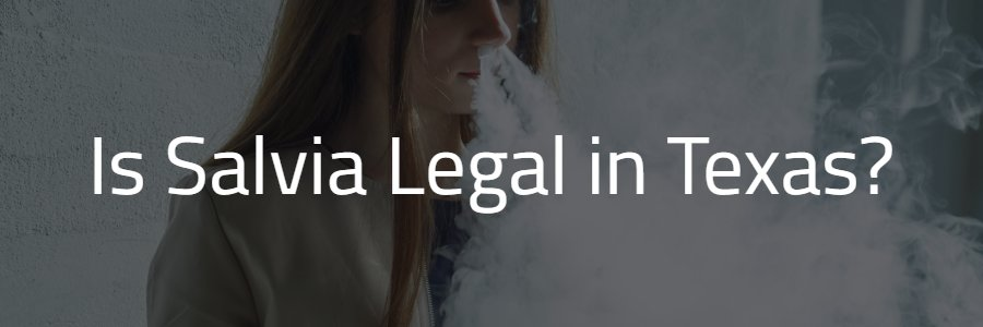 Is Salvia Legal in Texas?