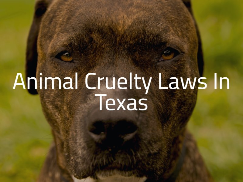 Animal Cruelty Laws in Texas